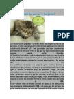 Sueñan Los Perros y Los Gato1
