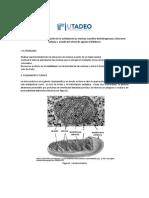 gu+¡a 6 enzimas mitocondriales 2015 (1) (1)