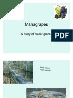 Ma Ha Grapes Story