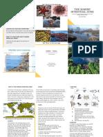 Alex's Marine Intertidal Brochure