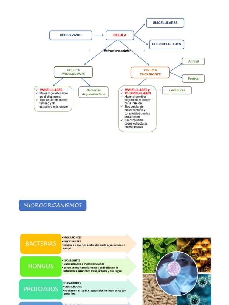 Resumen Micrrorganismos Cellule Biologie Eucaryotes