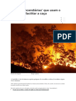 As 'Aves Incendiárias' Que Usam o Fogo Para Facilitar a Caça - Bbc Brasil