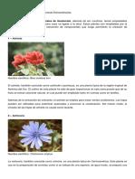10 Plantas Medicinales de Guatemala Extraordinarias