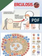 Presentación2 fisiopatologia