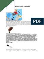 utensiliosparaelbarysusfunciones-130825223910-phpapp02
