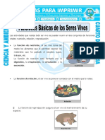 CANTUTA 4G CA Funciones de Los Seres