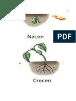 Proceso de Vida de Las Plantas