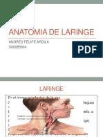 Anatomia de Laringe