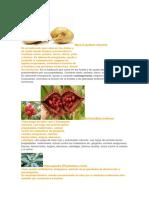 Plantas Nativas Luis
