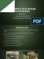 Ppt Kh Badak Jawa Dan Sumatra
