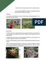 Las Plantas Acuáticas