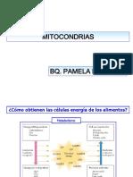 Clase08.Mitocondria.034.PLD
