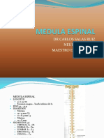 Medula Espinal Clase (2)