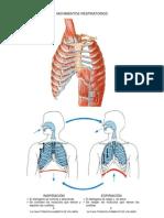 Mov_respiratorios