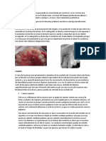 Anatomia Interna Anteriores