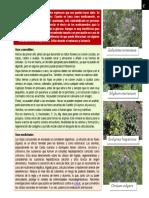 Botánica - Cirsium Spp.