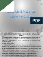 Seminario 1 Mecanismos de Reparación.ppt