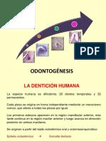 Clase Odontogénesis