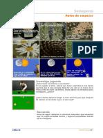 teoria semejanza_cideac.pdf
