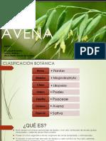 Avena (Sativa) (1)