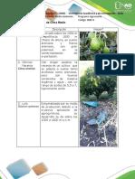 Cultivos de Clima Medio.