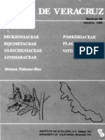 Flora de Veracruz Vittariaceae