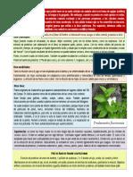 botánica - Tradescantia fluminensis
