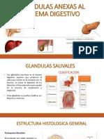 Glandulas Anexas Al Sistema Digestivo.