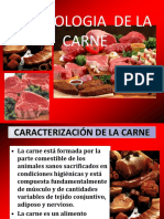 Exp- Carnes Estudents