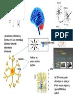 La Vida Secreta de Las Neuronas