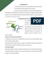 LA RESPIRACIÓN.docx