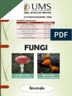 Fungi (bioprocess)