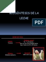 LECHE 2 - BIOSINTESIS DE LA LECHE - UPT.ppt
