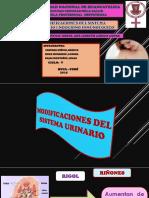 DiapositivasOBSTETRICIA I Corregido