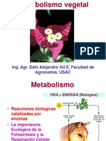 10. Metabolismo La Esencia de La Vida