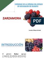 zarzamora-110712192829-phpapp02