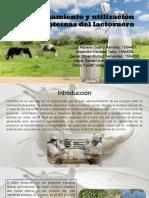 Proteinas Del Lactosuero