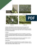 Las Plagas y Enfermedades de Los Árboles Frutales Son Una de Las Preocupaciones Más Importante de Los Horticultores Cada Año