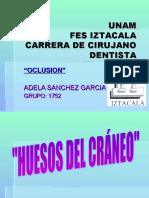 Oclusion (Huesos Del Craneo)