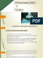 Exposicion de Fisiologia de Neurotrasmisores 1