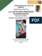 Practica Sistema Digestivo Conejo. NESTOR ORBE a.