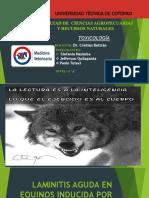 LAMINITIS AGUDA EN EQUINOS INDUCIDA POR VENENO DE BOTHROPS ALTERNATUS (YARARÁ.pptx