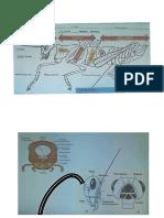 Partes de un insecto-Entomología