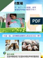 胎生和卵生.pptx