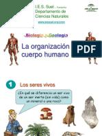 La_organizacion_del_cuerpo_humano.pps