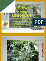 REPORTE BARCINO UNO