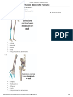 Huesos Esqueleto Humano Final