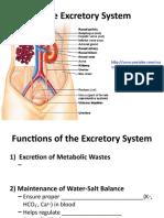 The Excretory System grade 12 bio