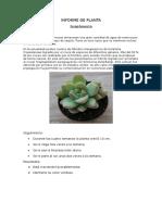 Informe de Planta