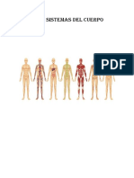Los Siete Sistemas Del Cuerpo Humano